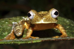 Weekly roundup and Ecuador's Rain Forest Tree Frog