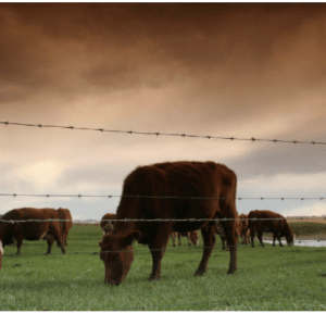 Weekly Roundup and grass-fed beef