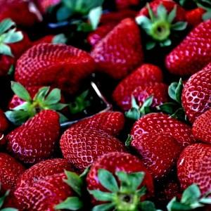 Driscoll's strawberry history