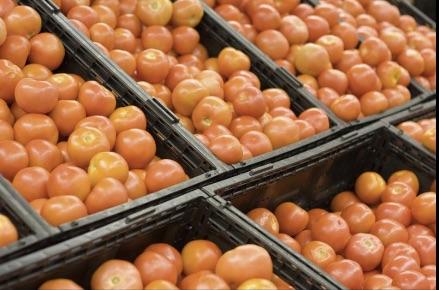 tastier tomatoes