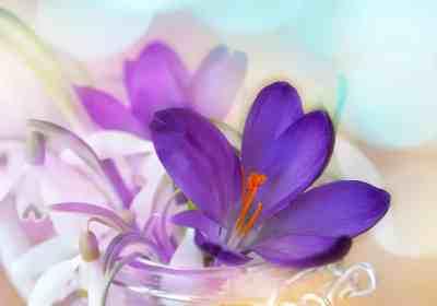 mai fleurs activités gratuites