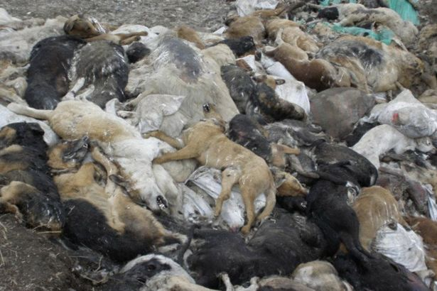 PROD-Killings-of-stray-animals