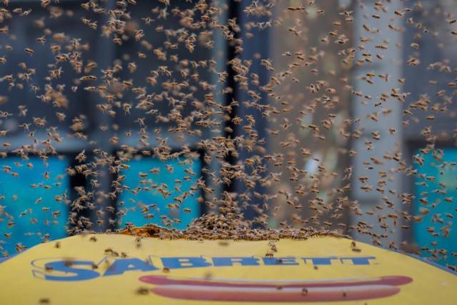 Les abeilles ont envahis Times Square à New York