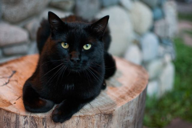 black-cat-on-tree-stump-588278854-5804d25b3df78cbc2867566c