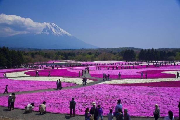japon flowers