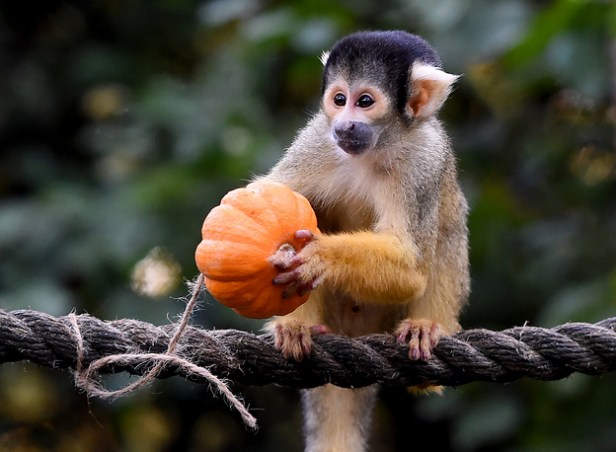 Halloween photocall at the London Zoo