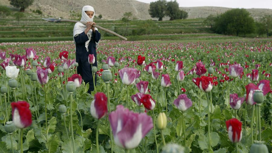 L'argent des États-Unis pour soutenir l'irrigation en Afghanistan «aide» à la culture du pavot