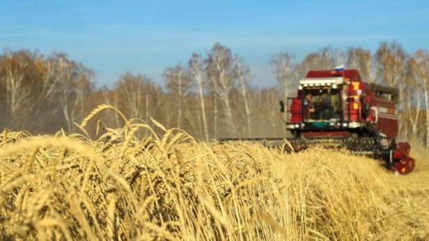 Cette année, la Russie a enregistré une croissance considérable de ses exportations agricoles et est devenue le premier exportateur mondial de blé.