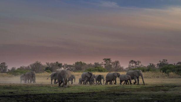 Elefantenherde Loxodonta africana in der Abenddämmerung Moremi Nationalpark Botswana Afrika **