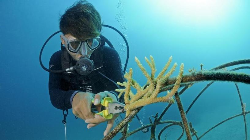 Récif de corail artificiel à Bali Jardinage avec des lunettes de plongée