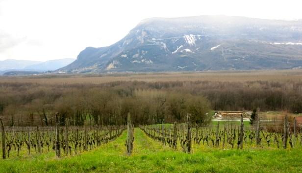 bach-savoie-vignes-en-chautagne-img_0159