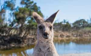 10 mythes courants sur l'Australie, démystifiés