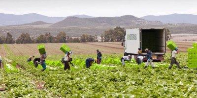 En Espagne, le nombre de décès dans le monde agricole a presque doublé