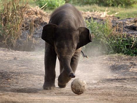 Всемирный день защиты слонов