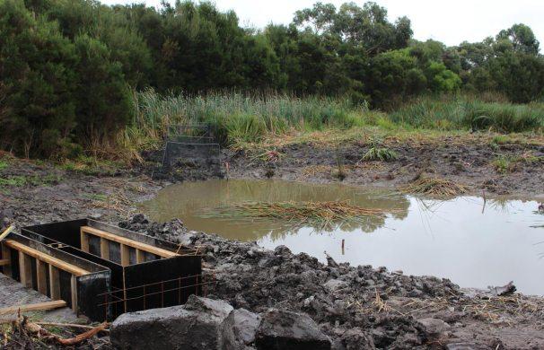 Ayr-Creek-Stormwater-Wetland