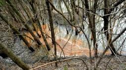 Забруднення відходами Орільської птахофабрики МХП в Єлизаветівці