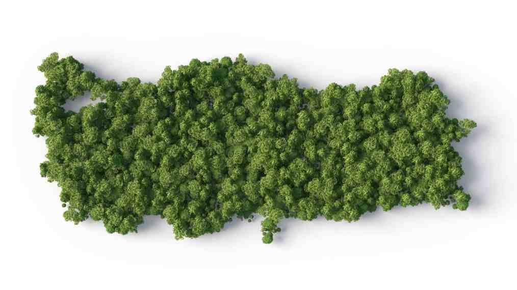 yeşil harita