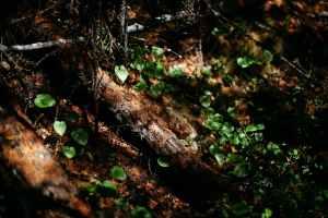 best garden maintenance-Best Plants for your Garden 2021