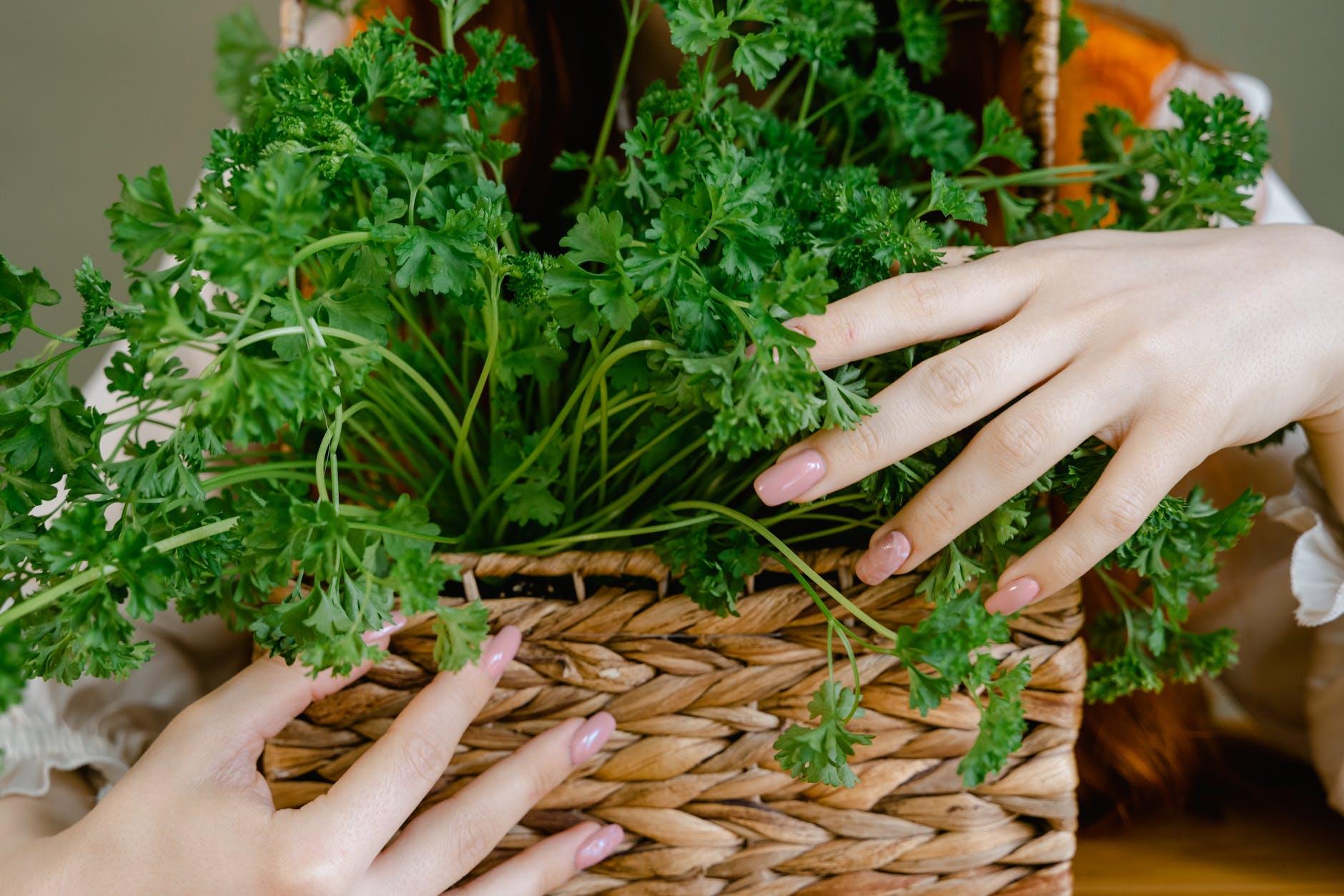 Bio-Organic Farming and Gardening