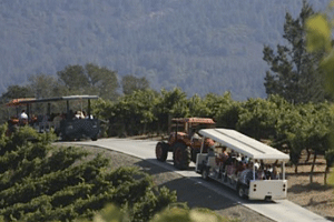 Benziger winery tours