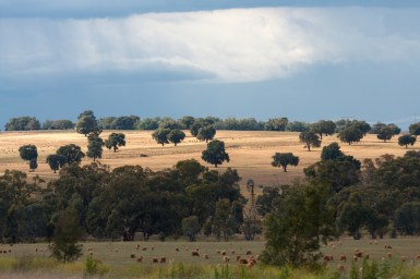 Dry paddocks studded with green trees and cows in the foreground