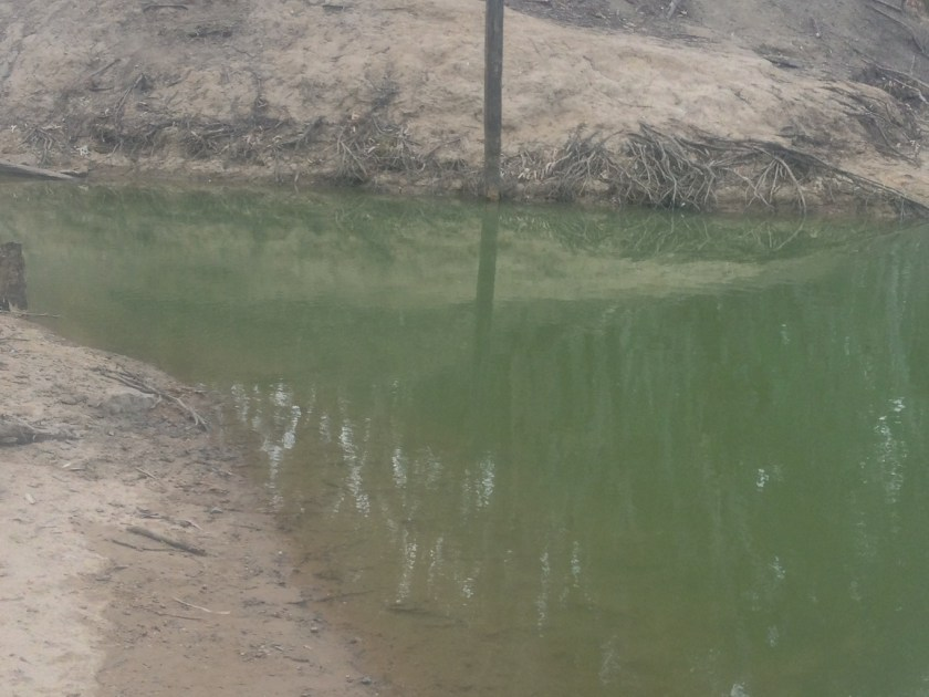 A pool of water containing blue-green algae