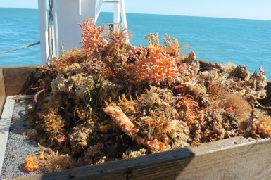 Corals and sea sponges on boat deck