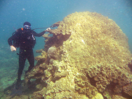 diver next to giant coral