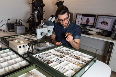 man inspecting fly collection