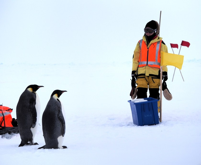 Jess Melbourne-Thomas standing next to two Emperor Penguins