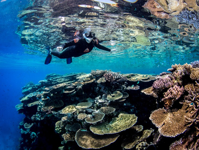 A snorkeler exploring the exceptional coral gardens at John Brewer Reef, September 2020. Image by Matt Curnock, CSIRO.