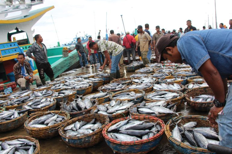 Tuna in cane baskets on a dock, being inspected by people