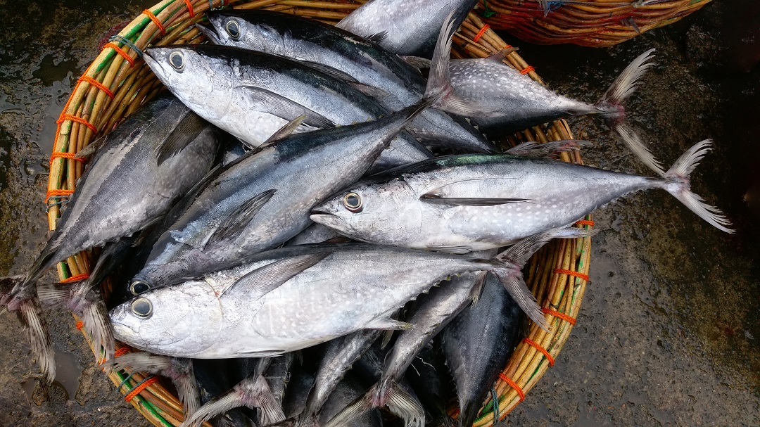 Longtail tuna fish in a basket