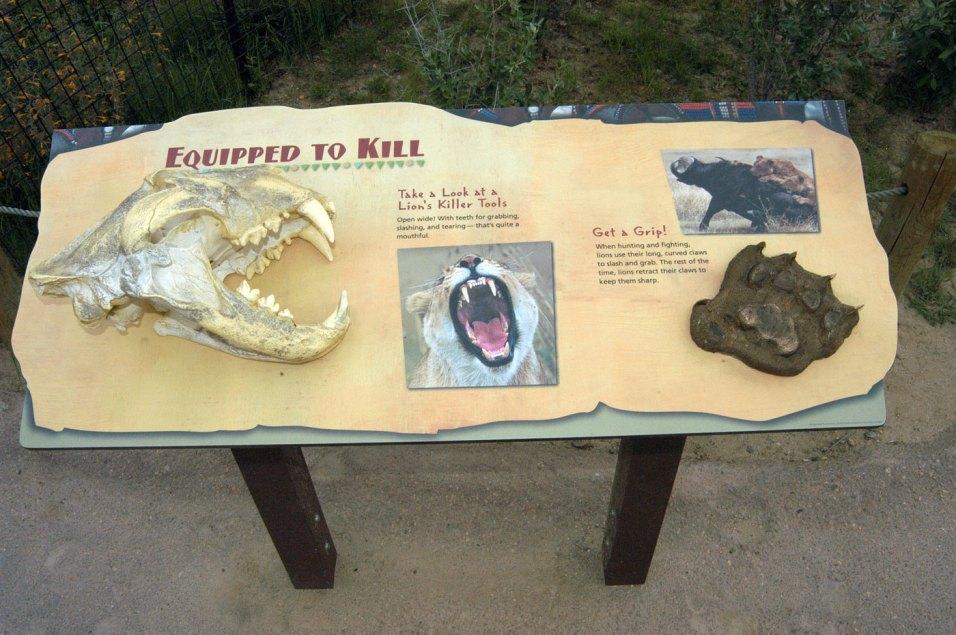 exhibit-Predator-Ridge1
