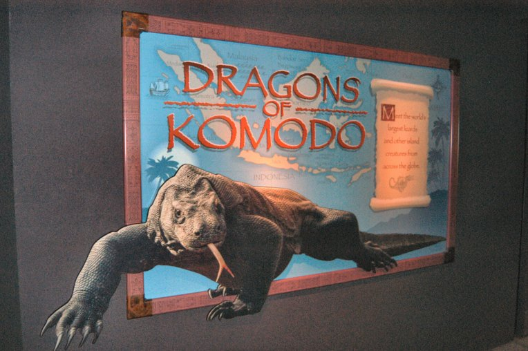 exhibit-komodo-dragon4
