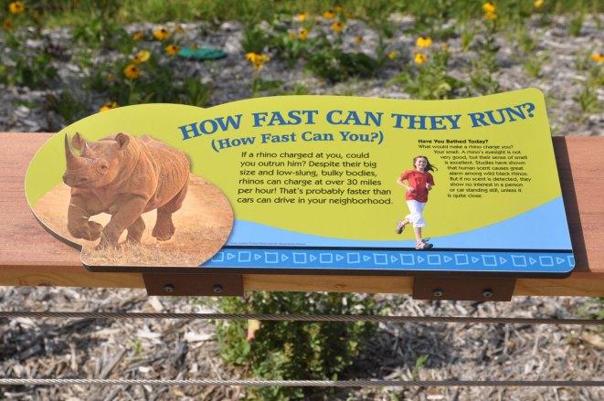 exhibit-rare-rhinos4