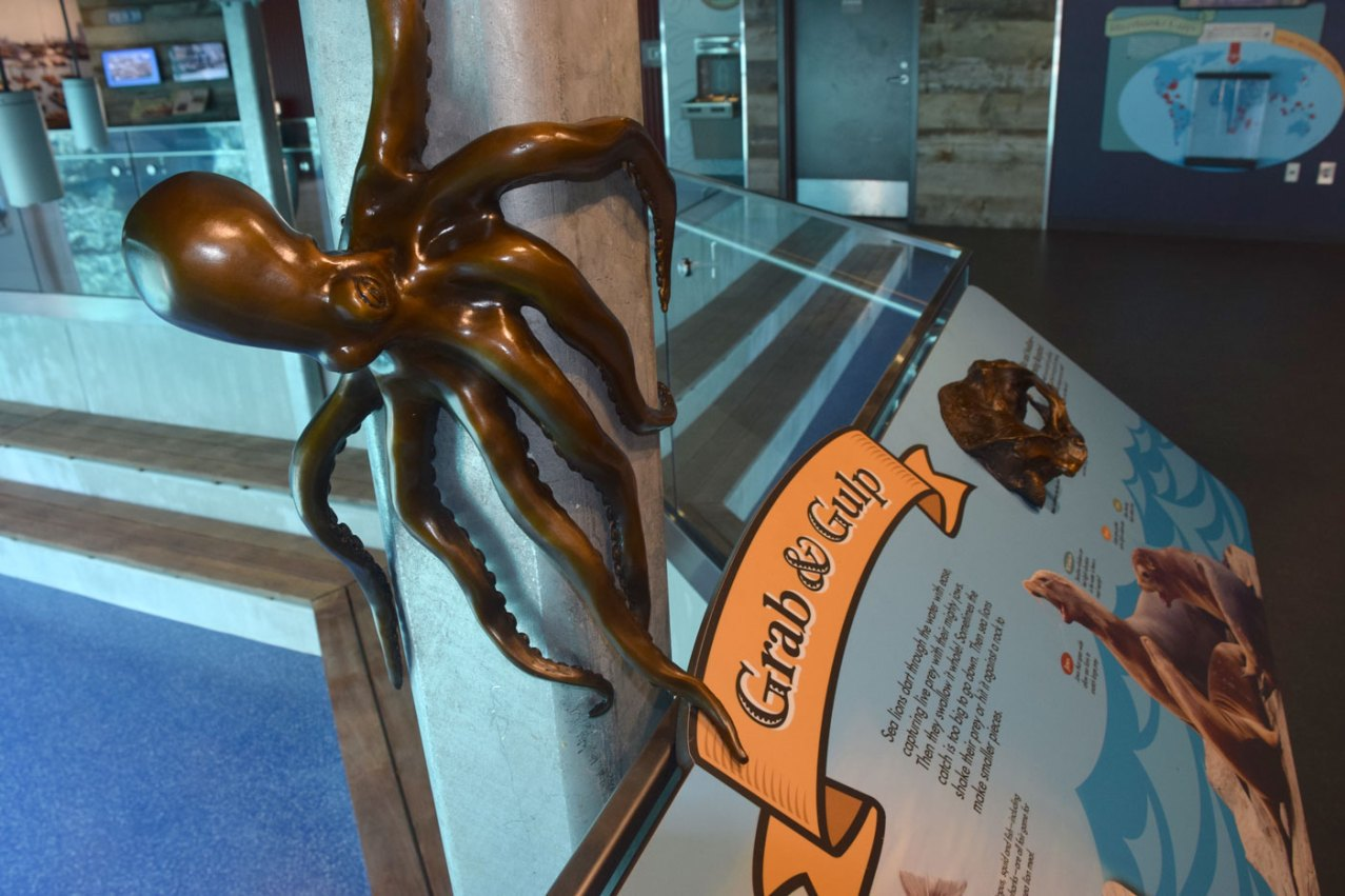 exhibit-sea-lion-16