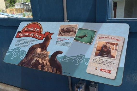 exhibit-sea-lion-3