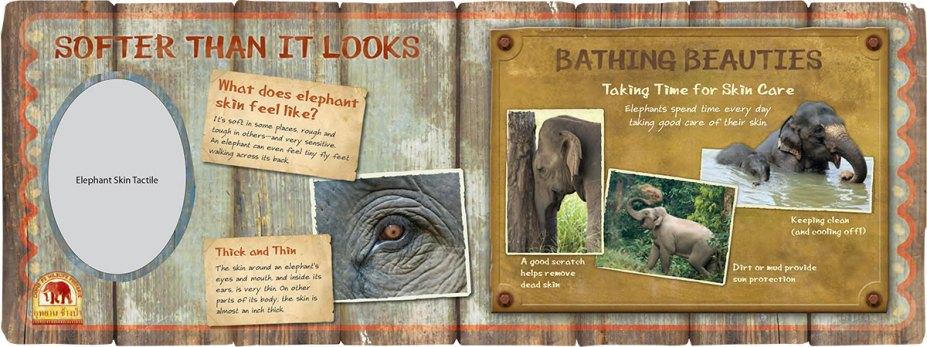 exhibits-elephant-14