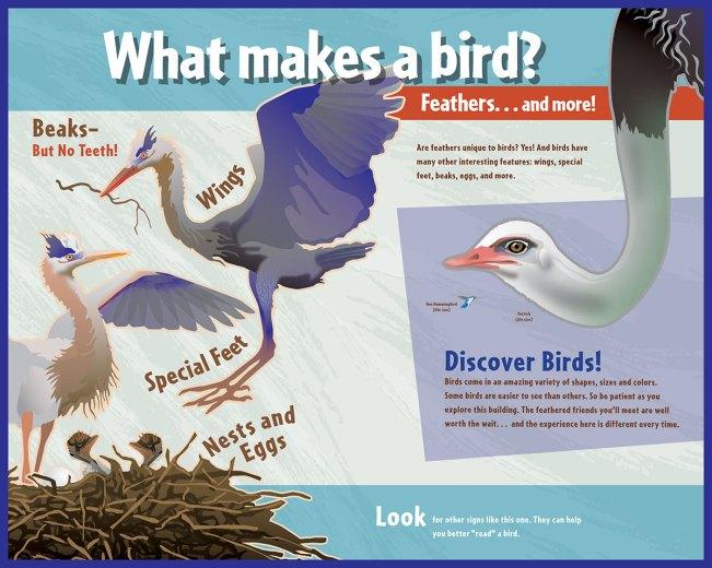 interpretive-world-birds-1