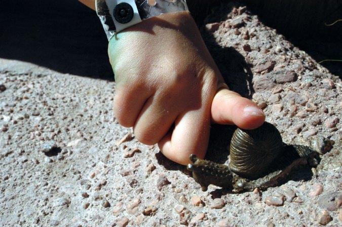 sculpture-snail