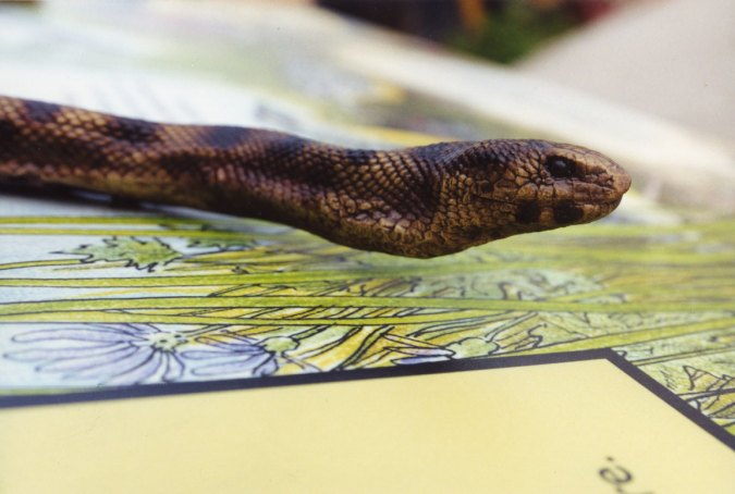 sculpture-snake-board