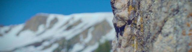 4d-mountain-moss