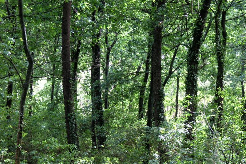 Frescura do bosque após a chuva