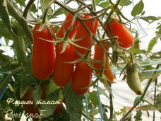 томат Фляшен-томат