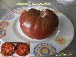 томат Маризол фиолетовый