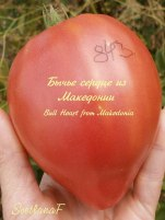 томат Bull Heart from Makedonia