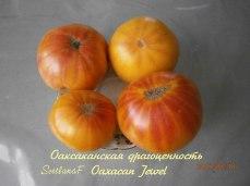 томат Oaxacan Jewel