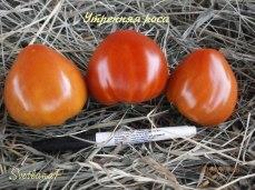 томат Утренняя роса