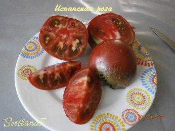 томат Испанская роза